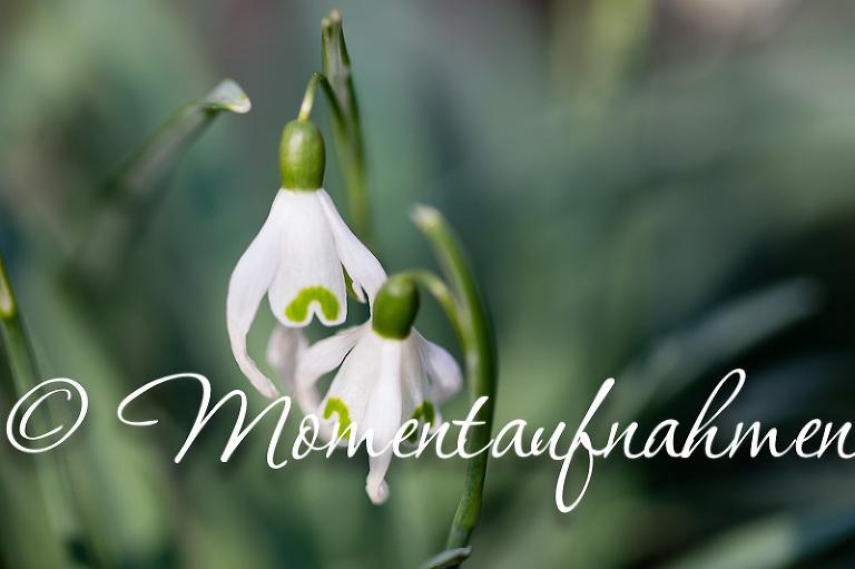 15_März_Frühlingserwachen04